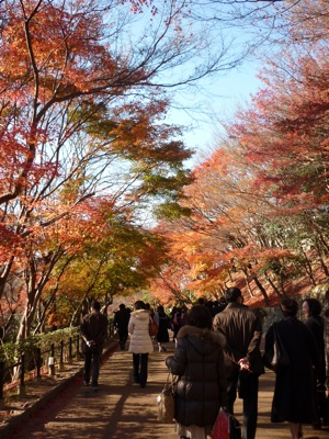 Autumn Leaves of Kiyomizu