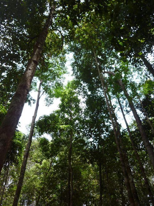 Gunung Berlumut trees