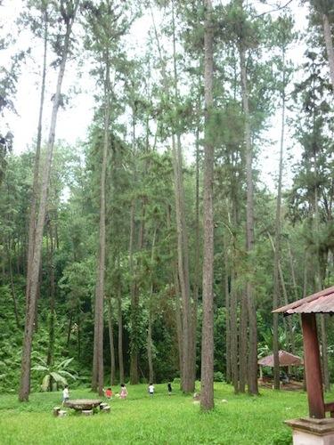 Hutan Lipur Konifer Bukit Tinggi