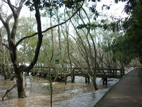 Mangrove Boardwalk