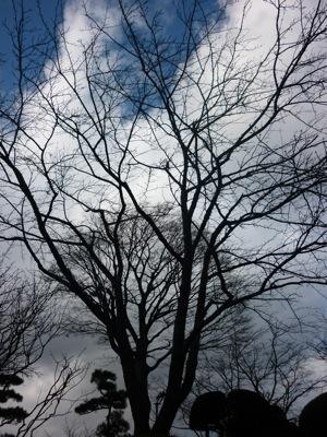 Sakura Trees in Peace Park
