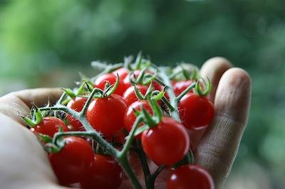 raw foods raw tomatoes