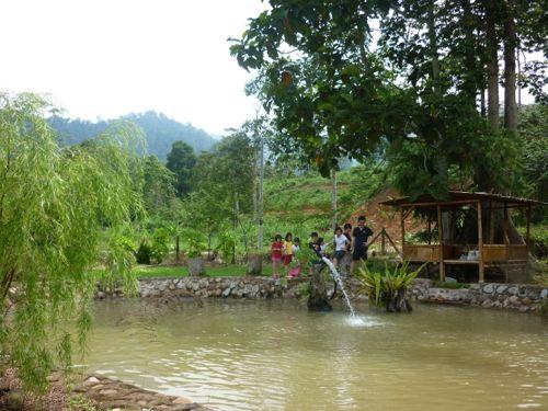 Fish Pond Saujana Janda Baik