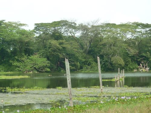 Kinta Nature Park lake