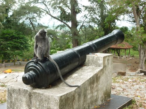 Monkey on Old Cannon