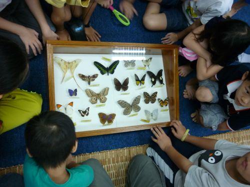Rimba Ilmu - Butterfly