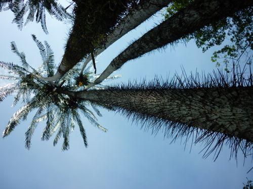 Rimba Ilmu - tree with horns