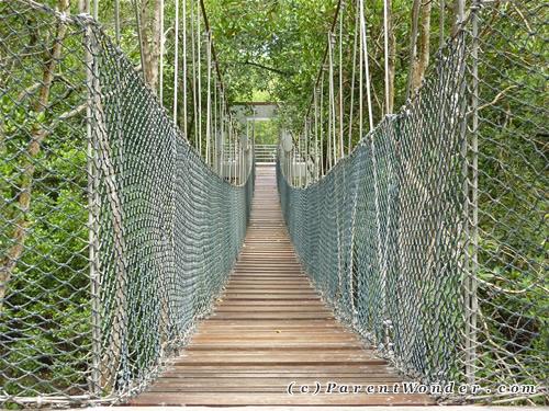 Taman Paya Bakau - Canopy Walk