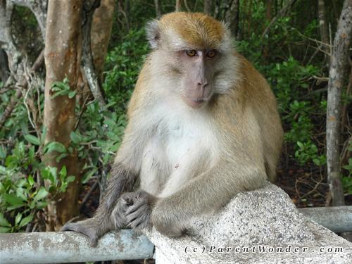 Taman Paya Bakau - Monkey