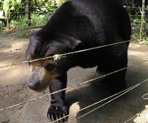 Deerland Park's Bear